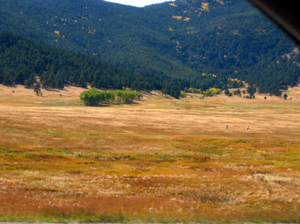 The beautiful hues and textures of the Colorado grasses